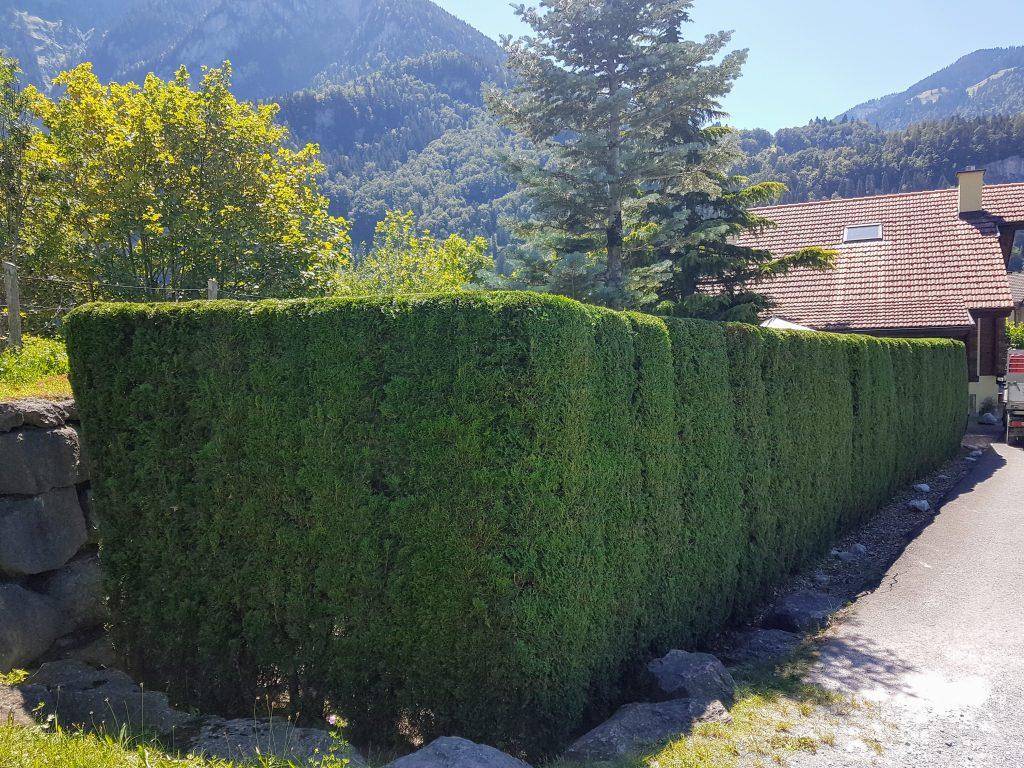 Unterhalt Garten Interlaken